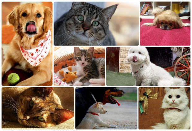 Pfizer Hayvan Sağlığı'nın 2013 PetStar Takvimi Fotoğraf Yarışması sonuçları belli oldu.